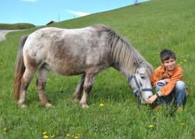 Ich-esse-gerne-aus-Jakobs-Hand---Pony-Galtinerhof