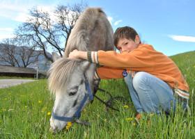 Pony---neuer-Freund-am-Galtinerhof-Südtirol