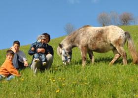 Wir-heißen-unser-neues-Pony-willkommen---Galtinerhof-Erlebnisbauernhof-Südtirol
